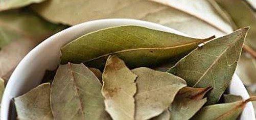 Лавровый лист с подсолнечным маслом для суставов матрикс для суставов купить киев